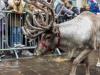 bradford+reindeer+parade_6225