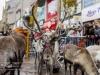 bradford+reindeer+parade_6234