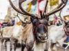 bradford+reindeer+parade_6241