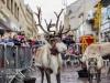 bradford+reindeer+parade_6242