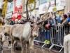 bradford+reindeer+parade_6245