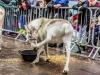 bradford+reindeer+parade_6248