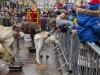 bradford+reindeer+parade_6256