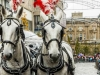 bradford+reindeer+parade_9017