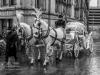 bradford+reindeer+parade_9095