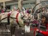 bradford+reindeer+parade_9133