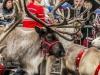 bradford+reindeer+parade_9150