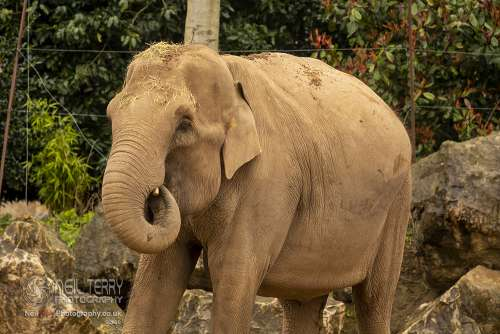 Chester_zoo_5923