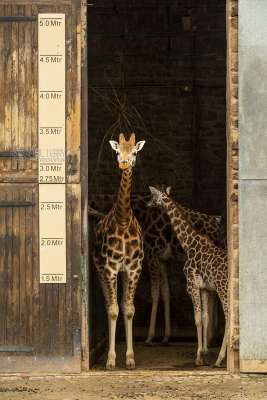 Chester_zoo_6000