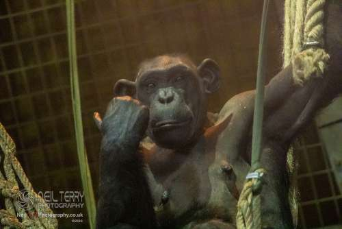 Chester_zoo_6039