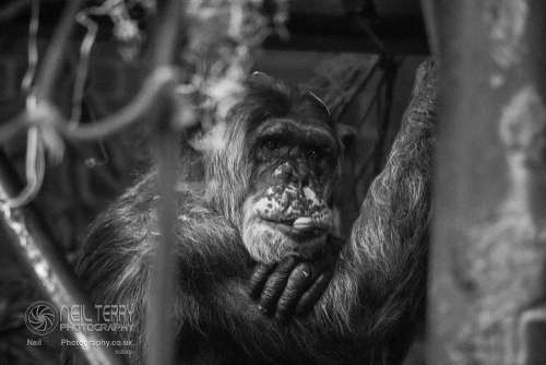 Chester_zoo_6043