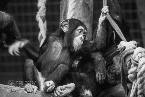 Chester_zoo_6073