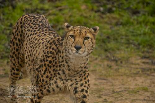 Chester_zoo_6139