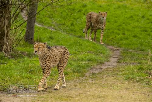 Chester_zoo_6147