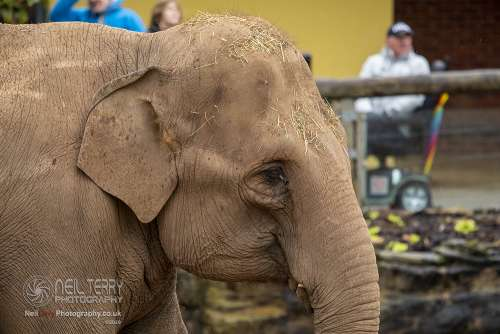 Chester_zoo_6244