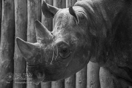 Chester_zoo_6265