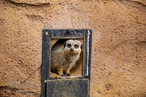 Chester_zoo_6283