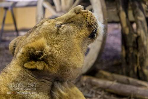 Chester_zoo_6327