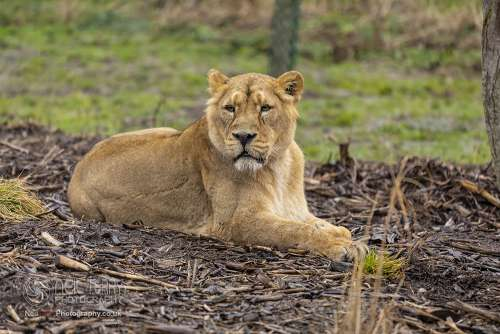 Chester_zoo_6350