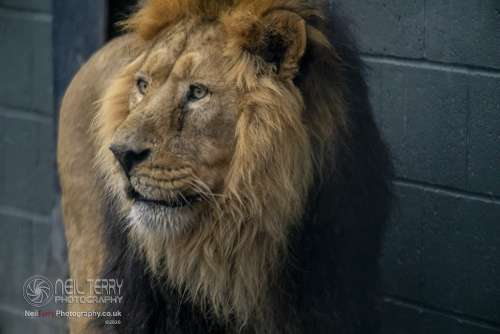 Chester_zoo_6378