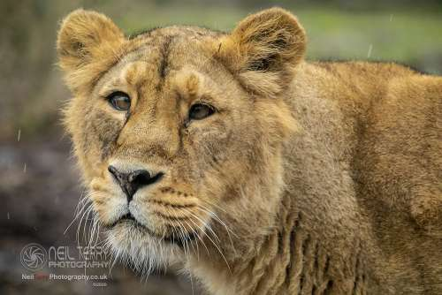 Chester_zoo_6413