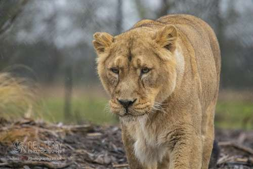 Chester_zoo_6477