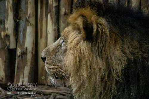 Chester_zoo_6518