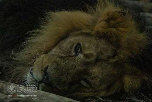 Chester_zoo_6547