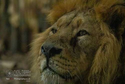 Chester_zoo_6559