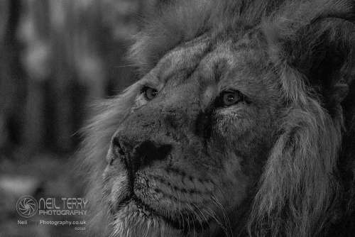 Chester_zoo_6560