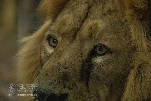 Chester_zoo_6593