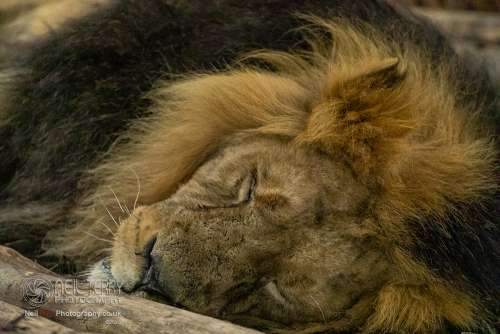 Chester_zoo_6617