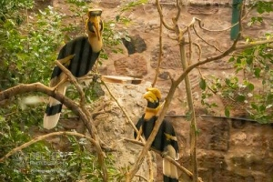 Chester_zoo_5996