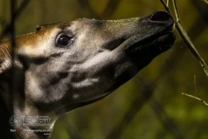 Chester_zoo_6023