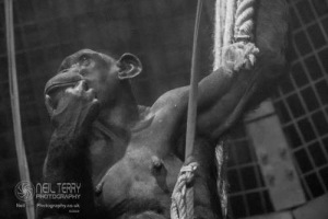 Chester_zoo_6041