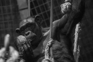 Chester_zoo_6050