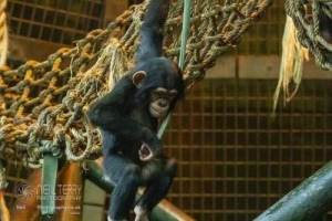 Chester_zoo_6057