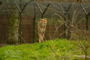 Chester_zoo_6118