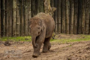 Chester_zoo_6202