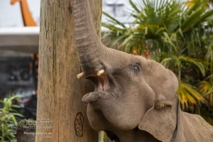 Chester_zoo_6232