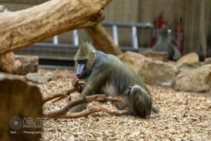 Chester_zoo_6255