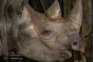 Chester_zoo_6274