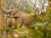 Chester_zoo_5916