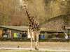 Chester_zoo_5948