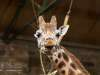 Chester_zoo_6021