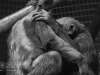 Chester_zoo_6079