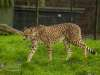 Chester_zoo_6129