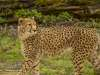 Chester_zoo_6159