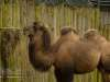 Chester_zoo_6180
