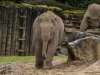 Chester_zoo_6209